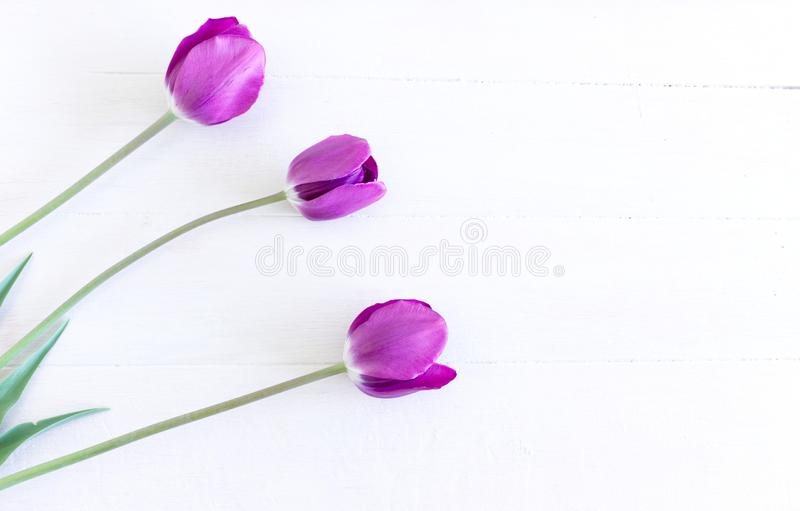 被称呼的储蓄照片 春天女性场面,花卉构成 束在白色背景的美丽的郁金香 r 免版税图库摄影