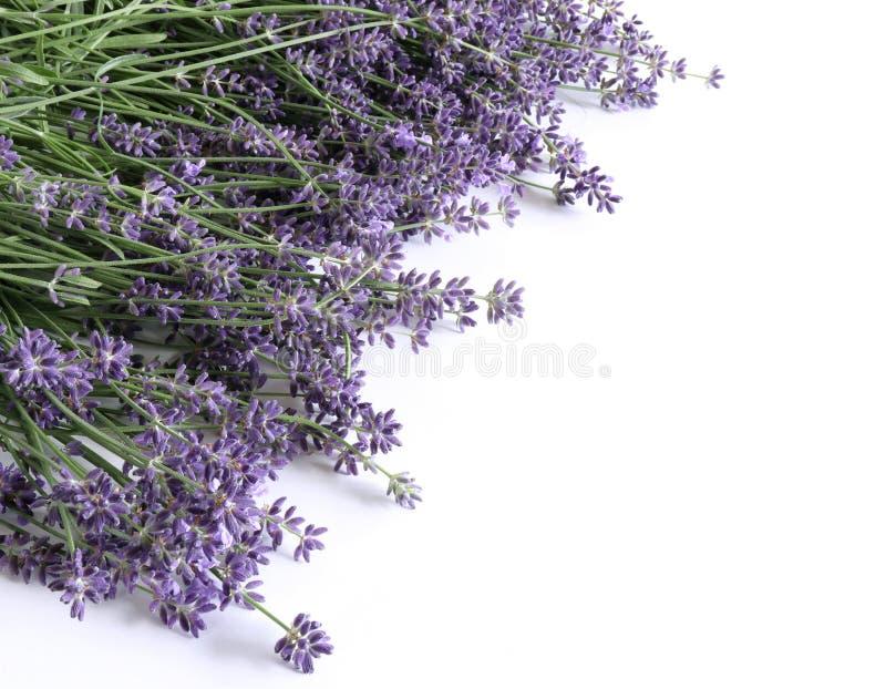 被称呼的储蓄照片 装饰静物画花卉构成 在白色木隔绝的淡紫色鲜花 免版税图库摄影