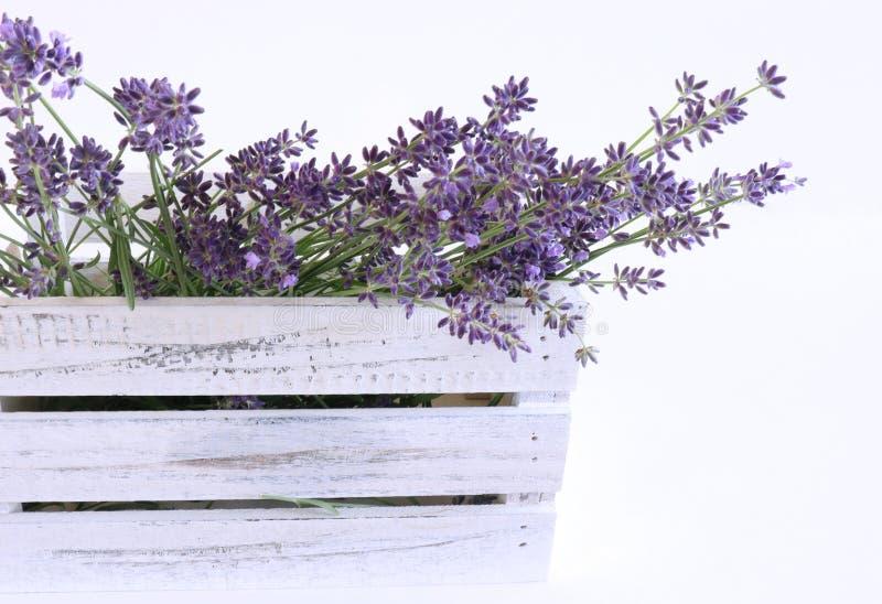 被称呼的储蓄照片 装饰静物画花卉构成 淡紫色鲜花在一个白色木箱的在白色 免版税库存图片