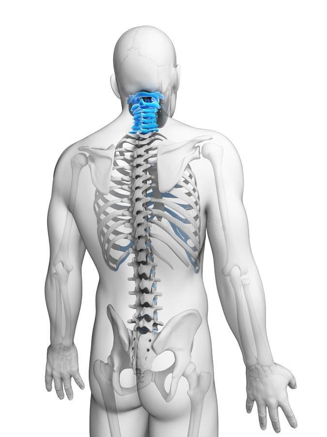 被突出的子宫颈脊椎 皇族释放例证