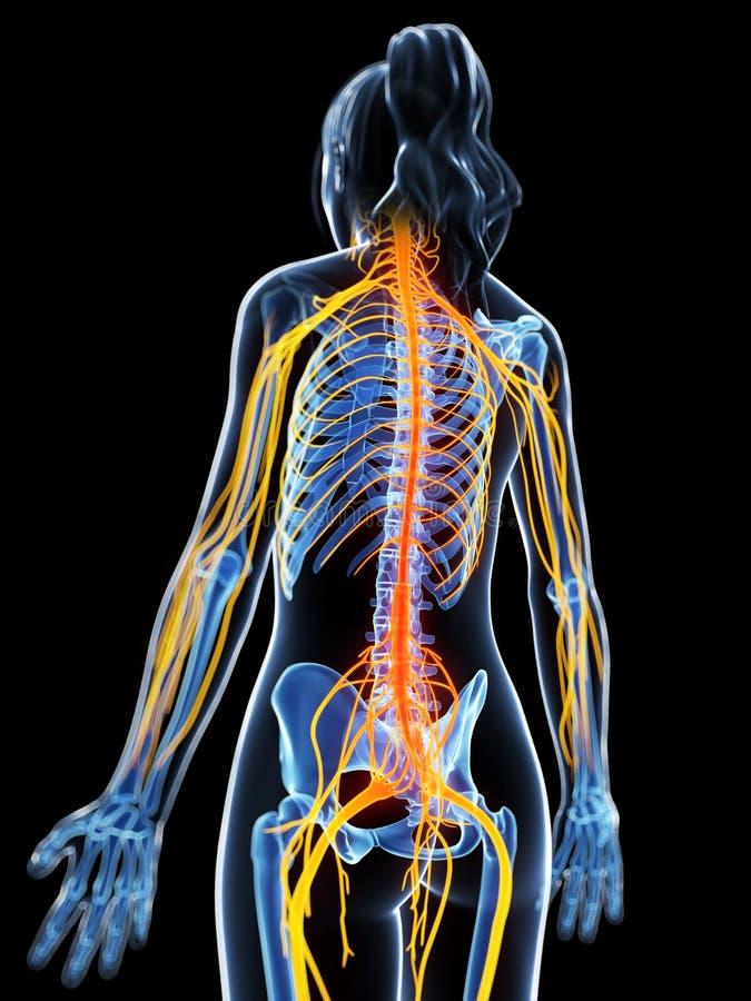 被突出的神经系统 库存例证