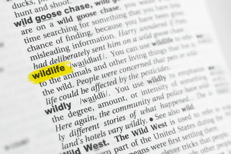被突出的英国词& x22; wildlife& x22;并且它的在字典的定义 库存图片