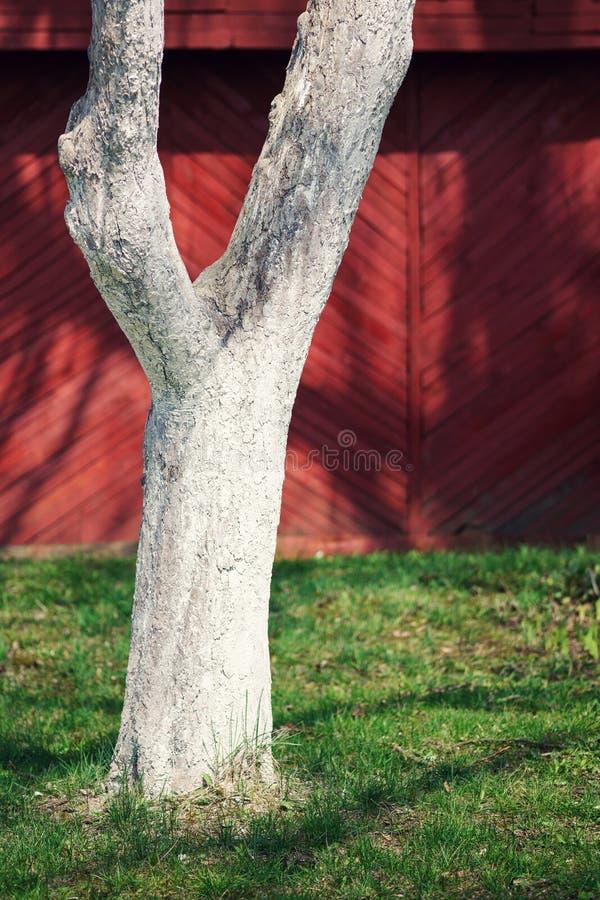 被粉刷的木树干 库存图片