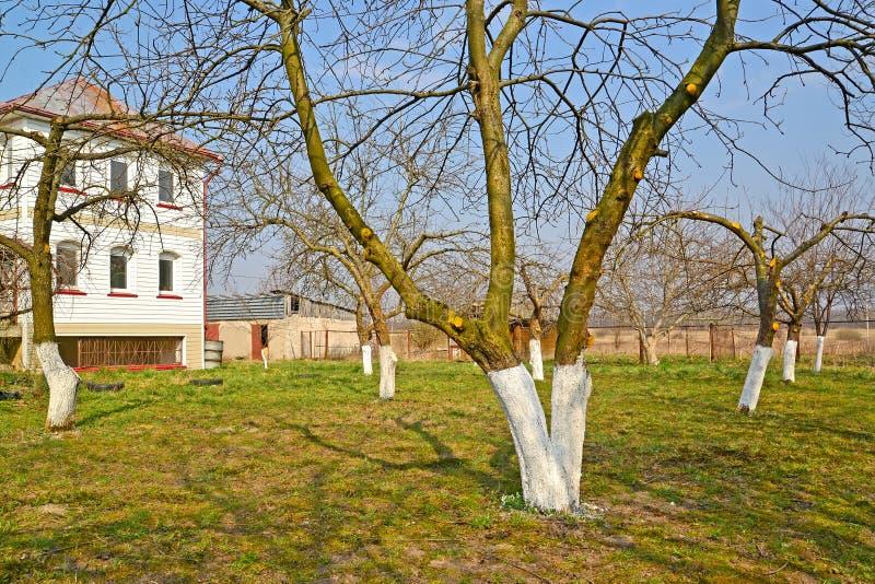 被粉刷的果树在季节性别墅的一个庭院里 ?? 库存图片