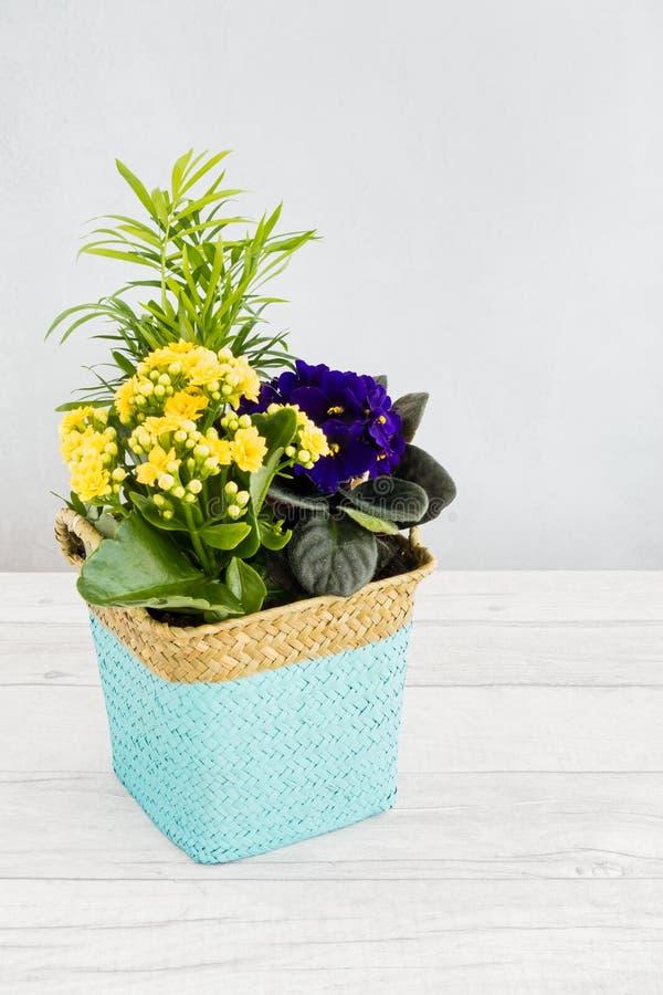 被编织的植物罐充满非洲紫罗兰、非洲堇和棕榈树 库存图片