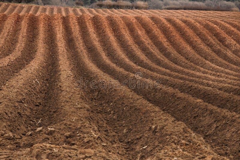 被耕的域 免版税库存图片