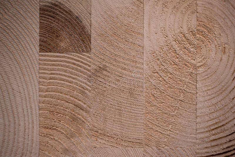 被胶合的阔叶树纹理背景 库存照片