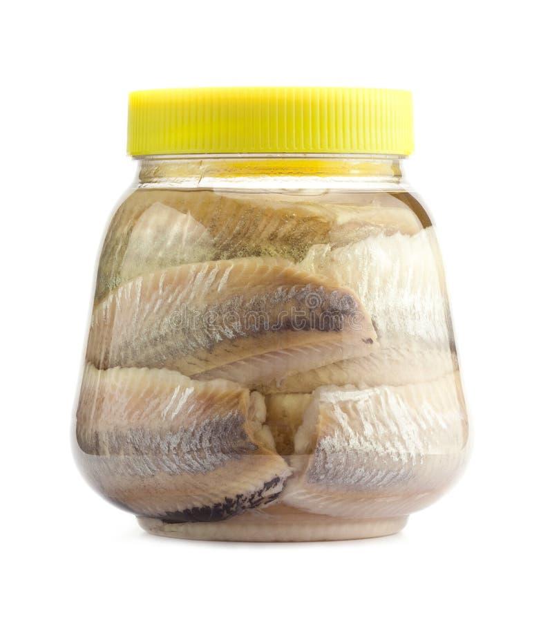 被腌制的鲱鱼 免版税库存图片