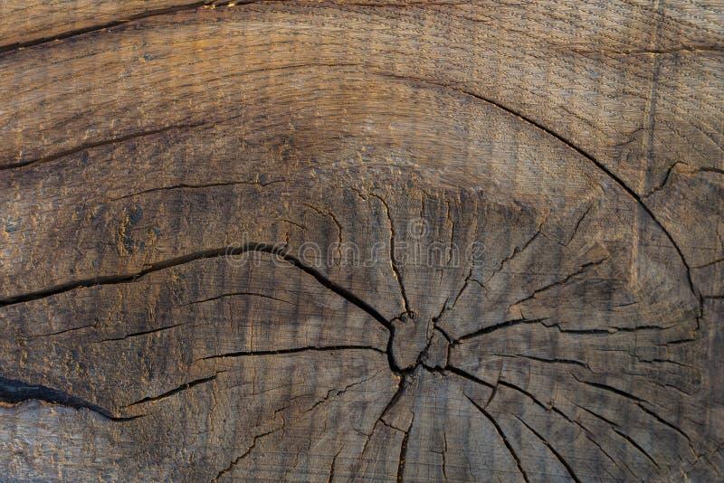 被裁减的真正的树木纹理 图库摄影