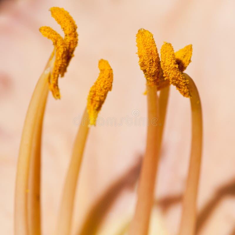 被装载的花粉 免版税库存图片