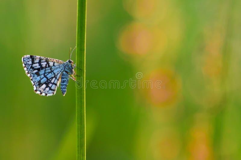 被装饰的荒地butterflyx 库存照片