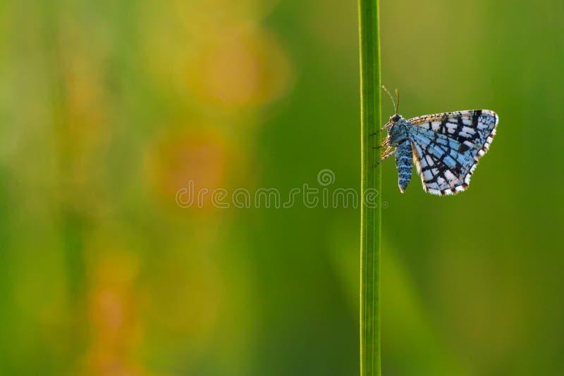 被装饰的荒地butterflyx 免版税图库摄影