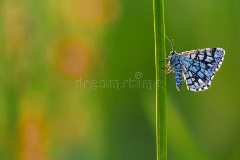 被装饰的荒地butterflyx 库存图片