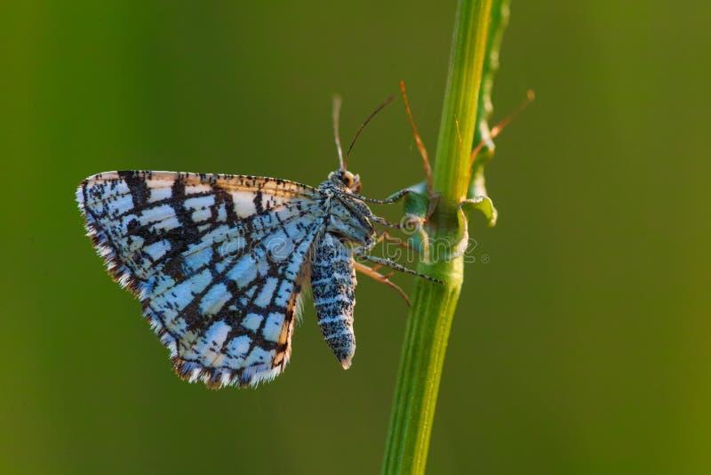 被装饰的荒地butterflyx 免版税库存照片