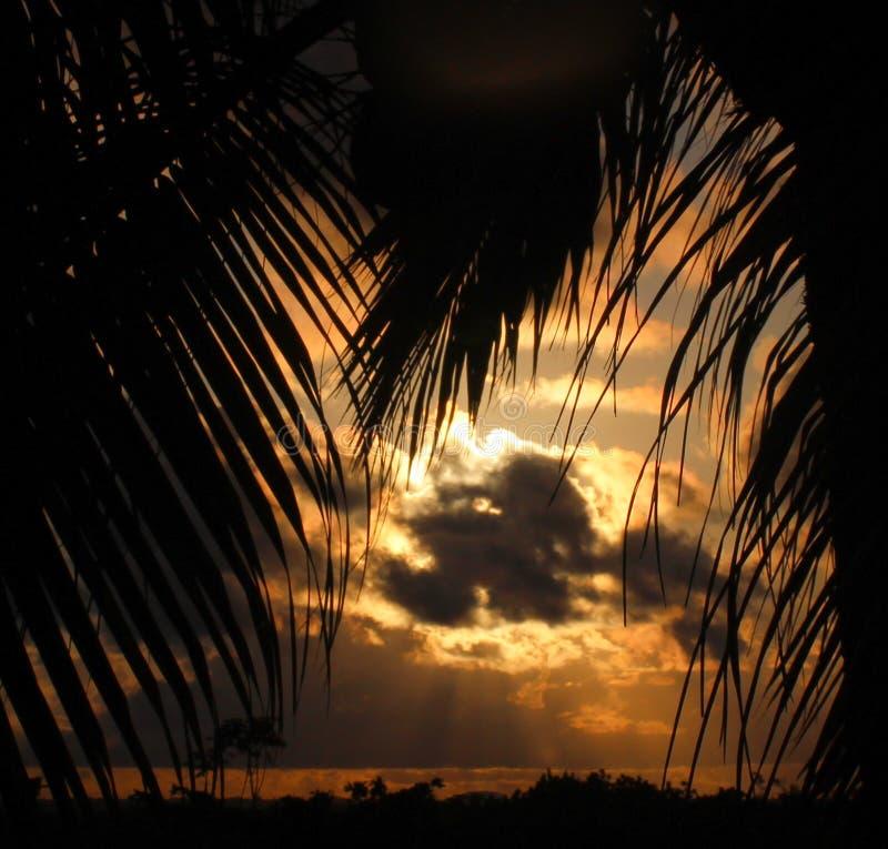 Download 被覆盖的日落构筑与棕榈 库存图片. 图片 包括有 覆盖, 日落, 照亮, 框架, 云彩, 结构树, 橙色 - 59102259