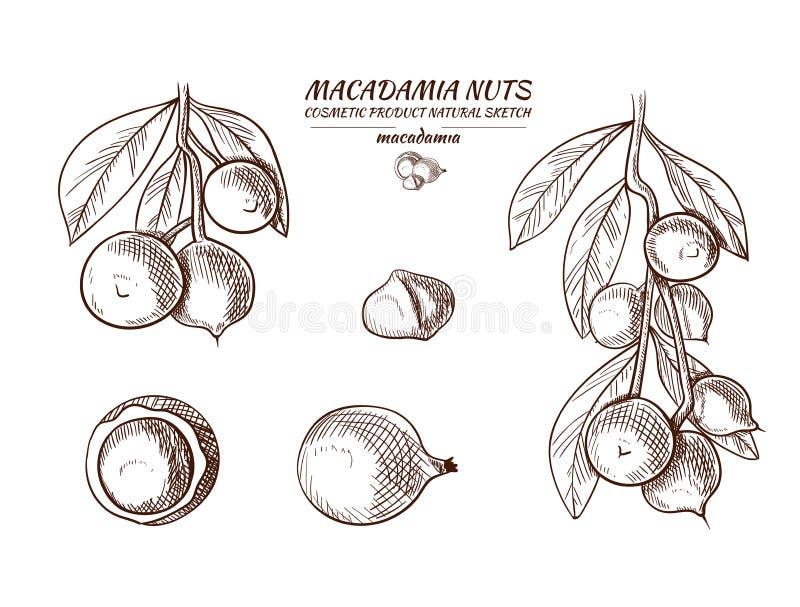 被设置的传染媒介马卡达姆坚果手拉的例证,剪影 向量例证
