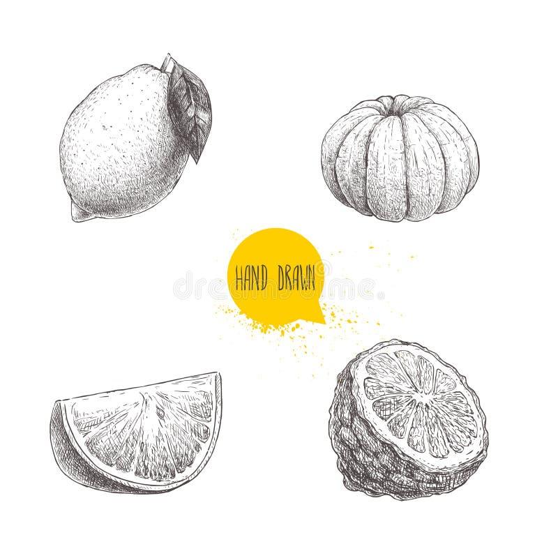 被设置的手拉的剪影样式柑橘水果 柠檬,石灰,剥了蜜桔、普通话、橙色切片和香柠檬一半 传染媒介illus 库存例证