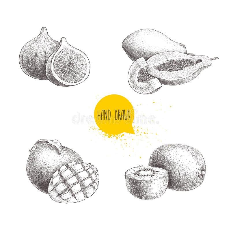 被设置的手拉的异乎寻常的果子 无花果果子、番木瓜构成、芒果与裁减和猕猴桃 Eco食物剪影传染媒介汇集 库存例证