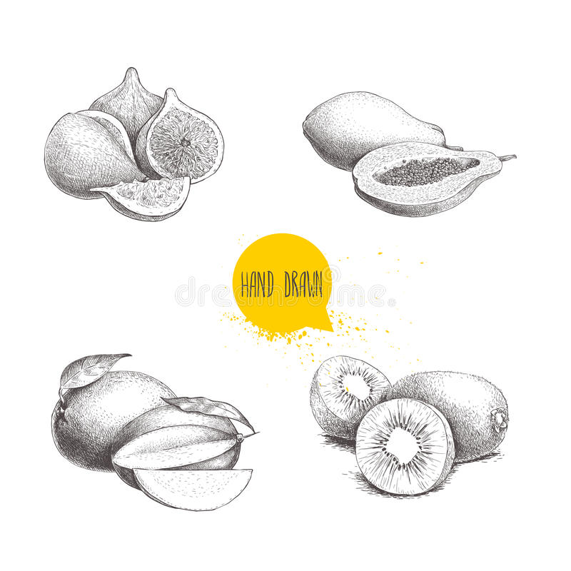 被设置的手拉的异乎寻常的果子 无花果结果实构成、番木瓜、芒果与裁减和猕猴桃 Eco食物剪影传染媒介例证 皇族释放例证
