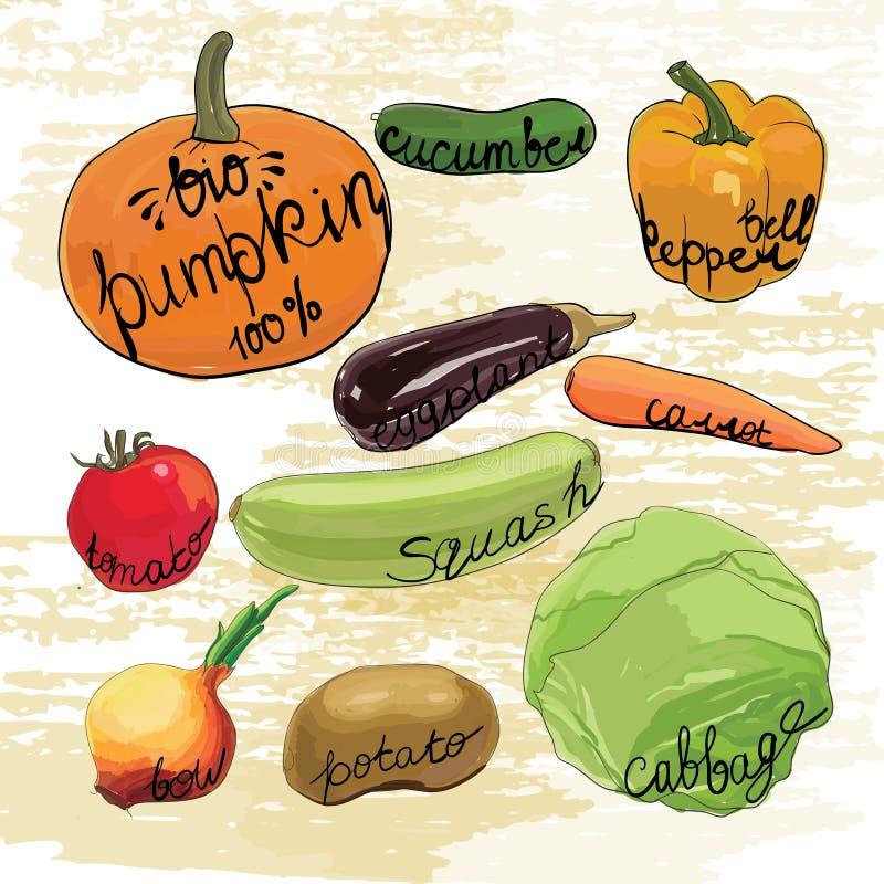 Download 被设置的手拉的菜 水彩作用 向量例证. 插画 包括有 凹道, 食物, 收集, 草图, 图标, 卧室, 创造性 - 72356940