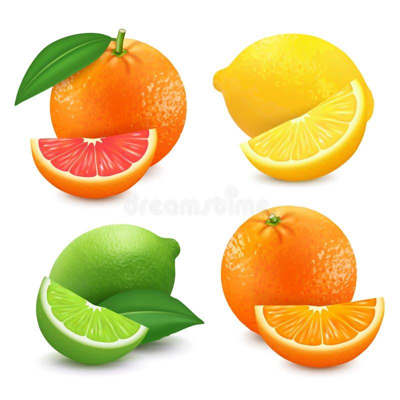 被设置的新鲜的柑橘水果 橙色葡萄柚柠檬石灰被隔绝的传染媒介例证 3D现实传染媒介 向量例证