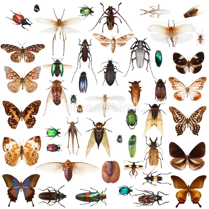 被设置的昆虫 皇族释放例证