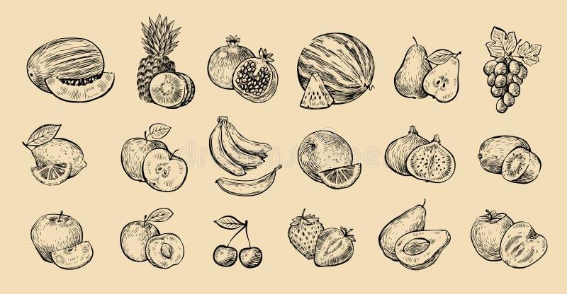 被设置的果子 新鲜食品,健康吃概念剪影 也corel凹道例证向量 皇族释放例证