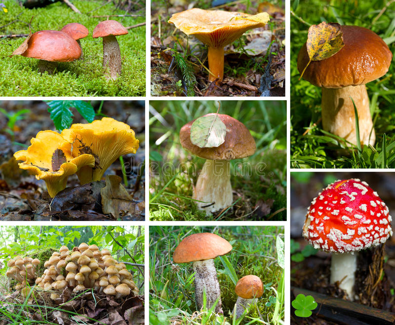 被设置的森林蘑菇 库存照片
