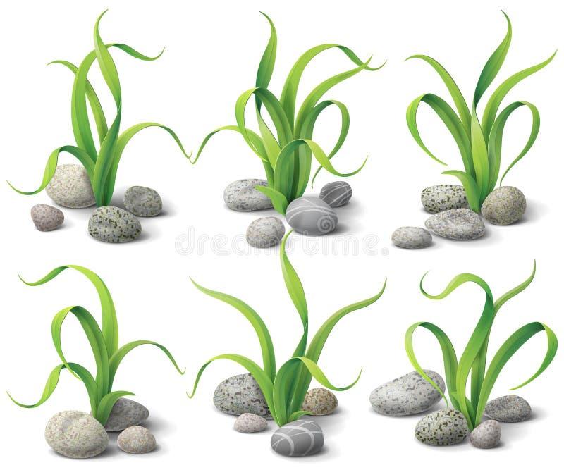 被设置的海藻和石头 向量例证