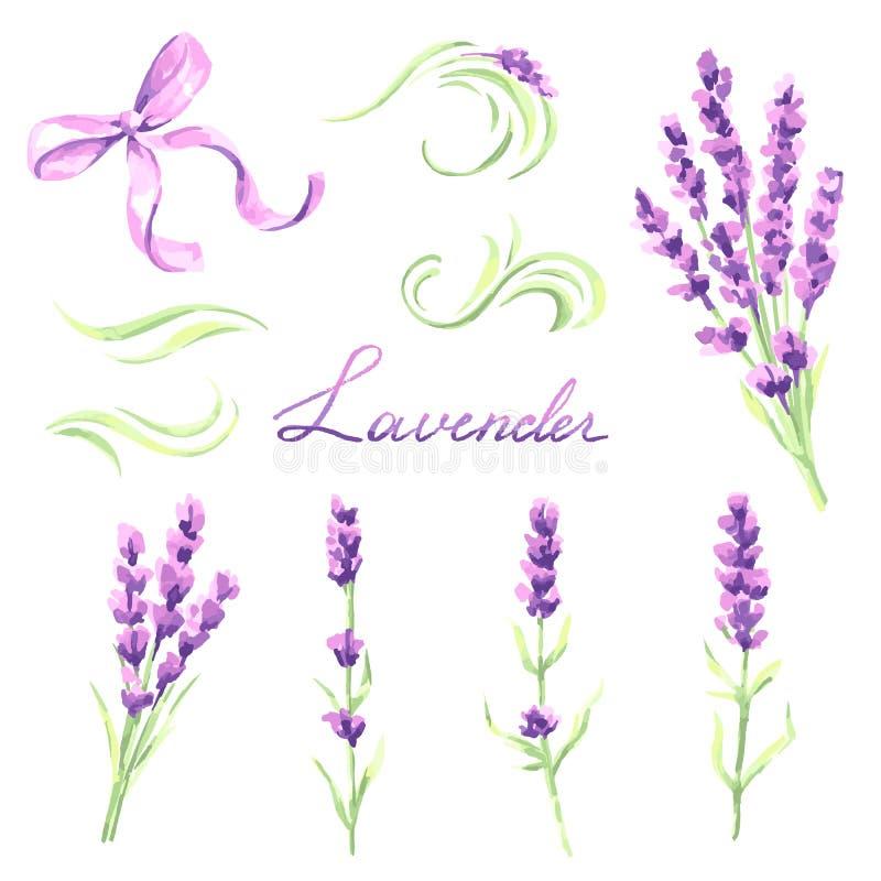 被设置的淡紫色花和束 普罗旺斯草本的水彩自然例证 库存例证