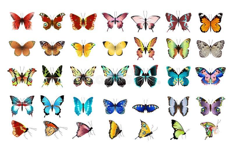 被设置的美丽的蝴蝶 库存例证
