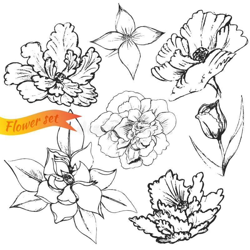 被设置的花:鸦片,郁金香,百合,木兰,英语 向量例证