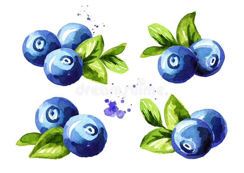 被设置的蓝莓构成 与叶子的新鲜的莓果 在白色背景隔绝的手拉的水彩例证 库存例证