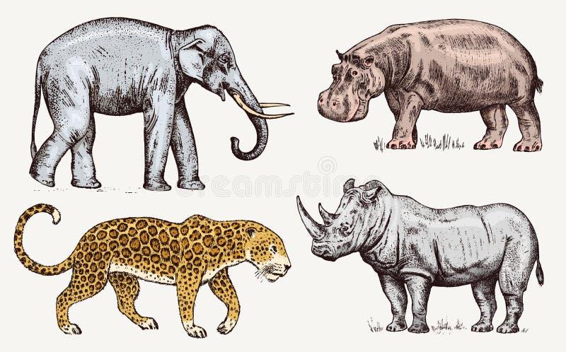 被设置的非洲动物 犀牛大象河马豹子 被刻记的手拉的葡萄酒老单色徒步旅行队 库存例证
