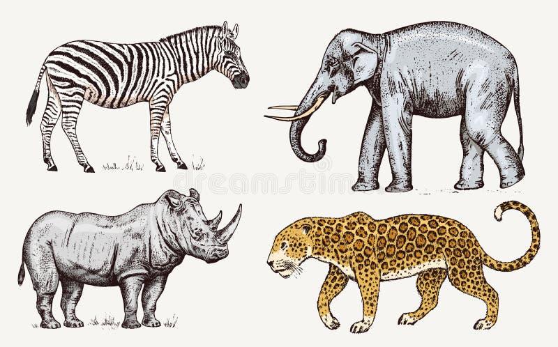 被设置的非洲动物 犀牛大象豹子 被刻记的手拉的葡萄酒老单色徒步旅行队剪影 向量 皇族释放例证