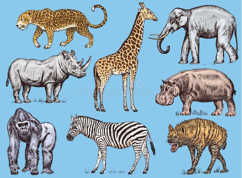 被设置的非洲动物 犀牛大象长颈鹿河马豹子鬣狗西部大猩猩野生斑马 被刻记的手 向量例证