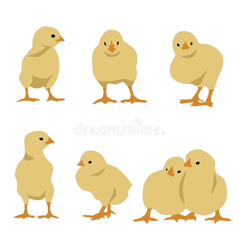 被设置的鸡 向量例证