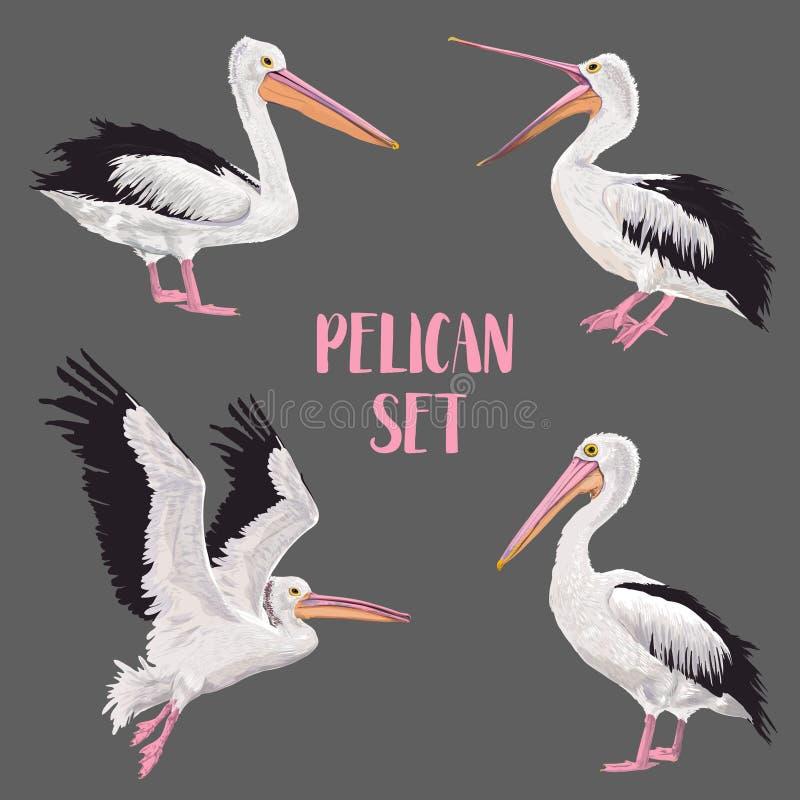 被设置的鹈鹕鸟 在通配的动物 野生生物海鸟 水彩Waterbird 向量例证