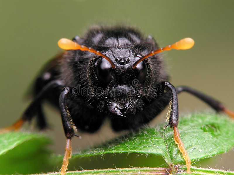 被识别的昆虫没有 库存照片