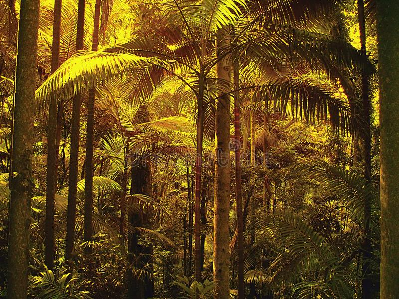 被过滤的光通过棕榈叶在次级热带雨林里 库存图片