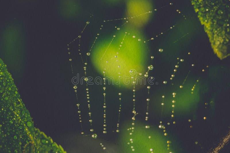 被过滤的蜘蛛网宏指令 免版税库存照片
