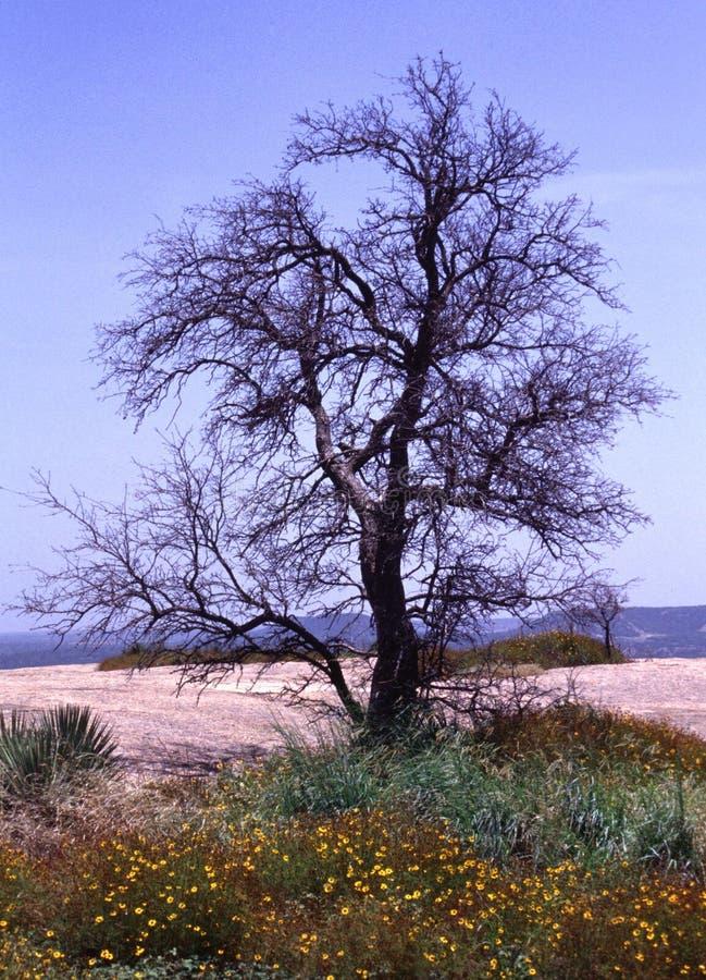 被迷惑的树 免版税库存图片