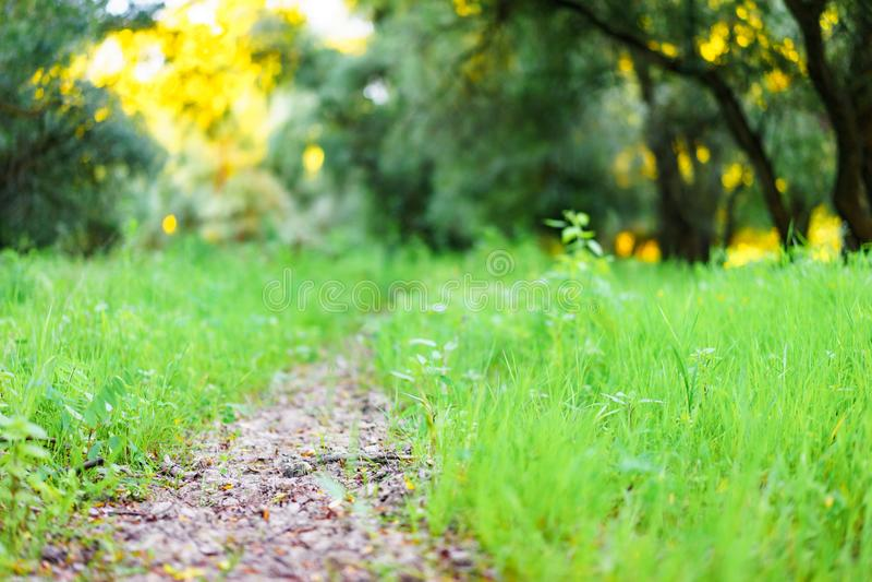 被迷惑的森林的道路 免版税库存图片