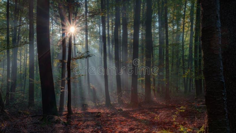 被迷惑的秋天森林 免版税库存照片