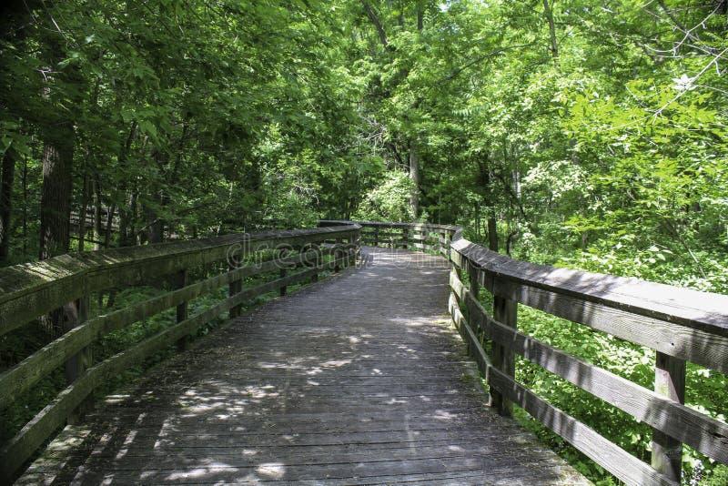 被遮蔽的木板走道在森林地 免版税库存照片