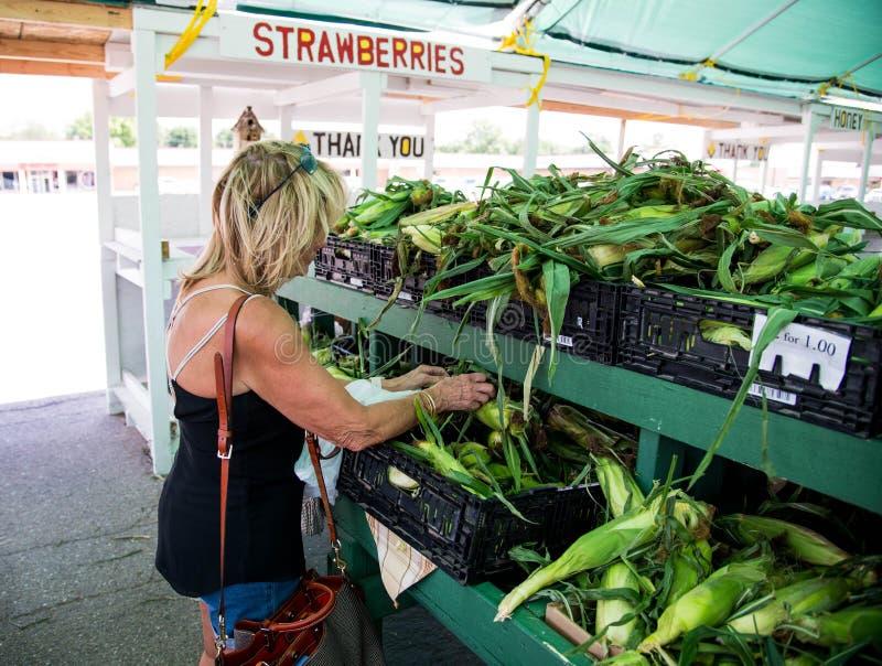 被采摘的新鲜的玉米 免版税图库摄影