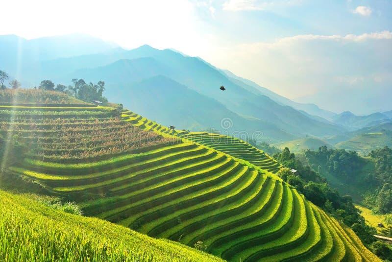 被重归档的米,越南 免版税图库摄影