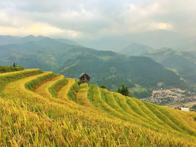 被重归档的米,越南 免版税库存照片