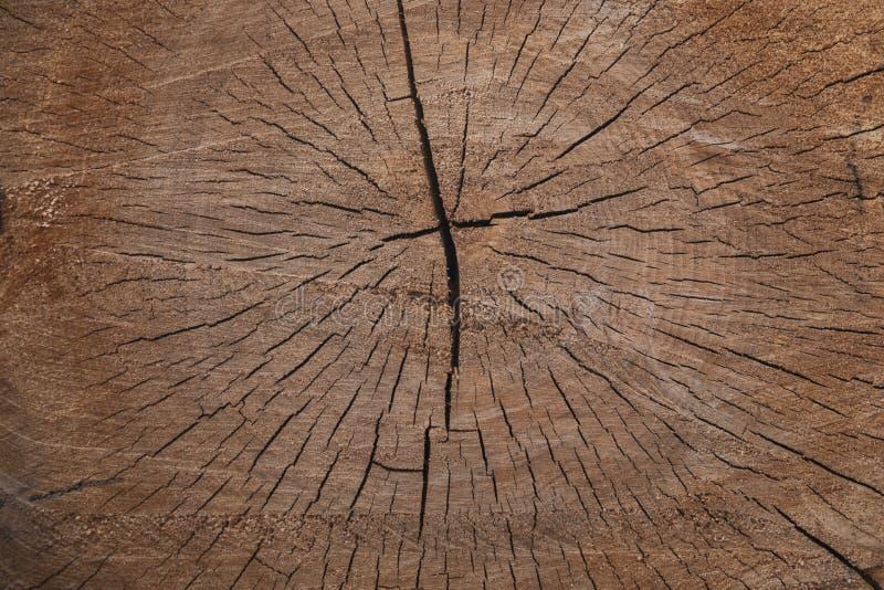 被锯的木头裂缝桦树纹理背景 库存照片