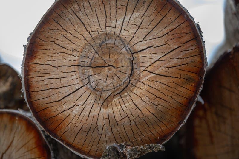 被锯的木头裂缝 免版税图库摄影